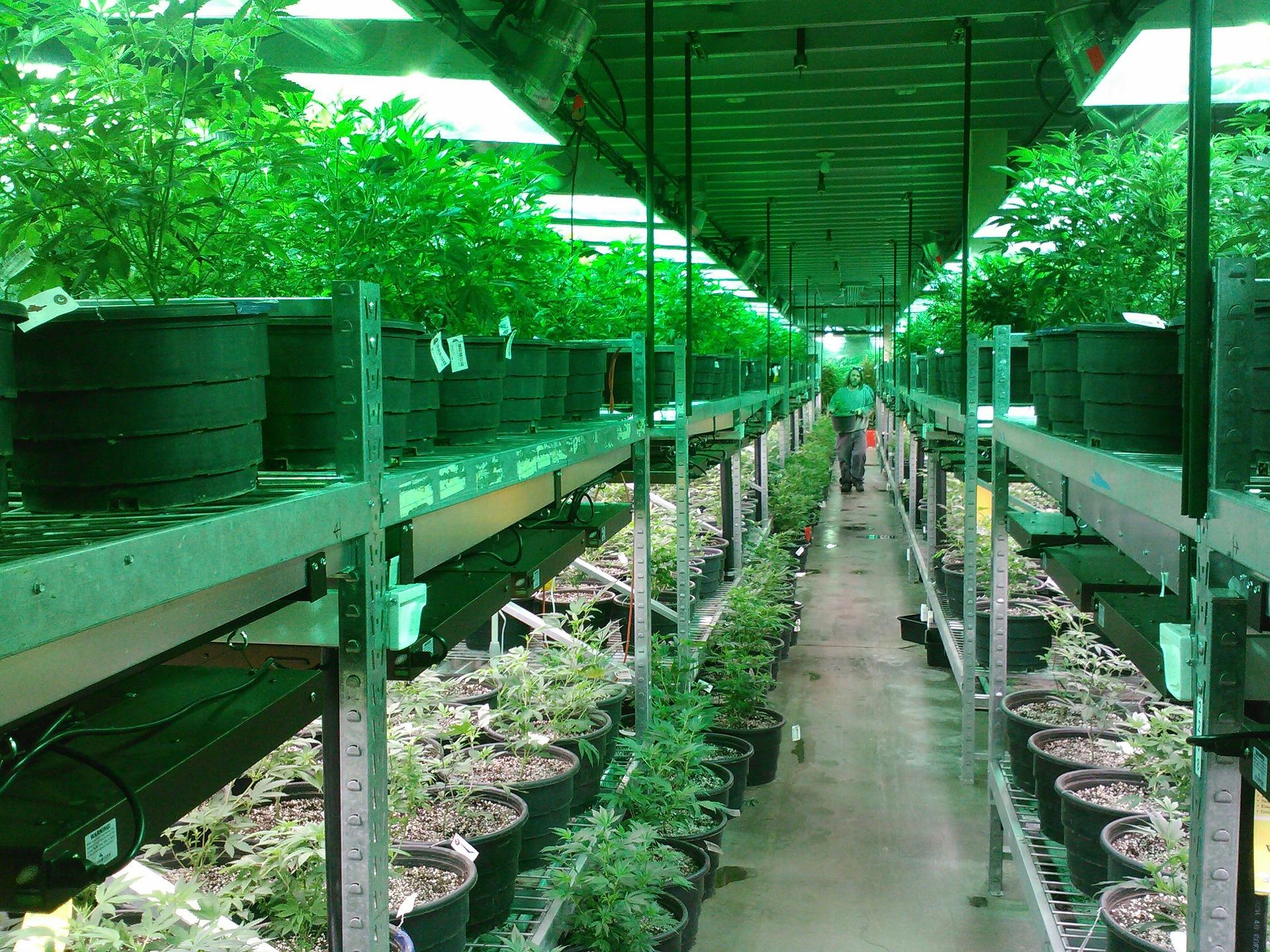 New Jersey Legislature Passes Measures for Cannabis Market